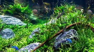 Aquarium Decorating Tips