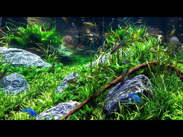Aquarium Decorating Tips Youtube