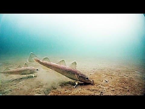 Рыбалка на Океанской. Подводная съемка. Владивосток 07 марта 2015
