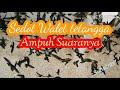 Sedot Walet Tetangga Ampuh Suaranya Sedotwalet Panggilwalet Dd  Mp3 - Mp4 Download
