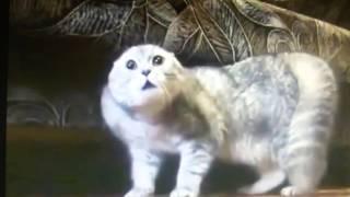 Кошки поют!!! :D