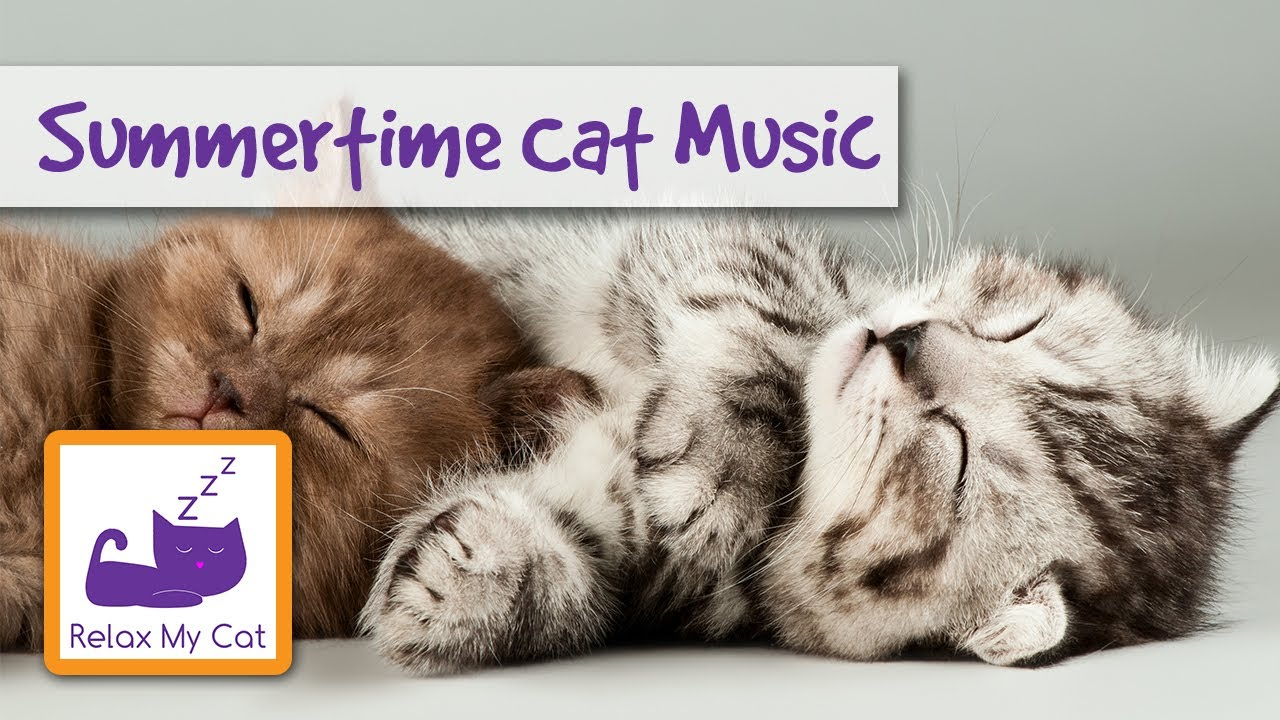 Music To Help Cats To Relax In The Summer Youtube
