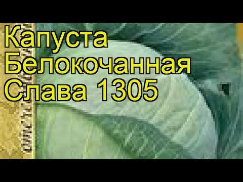 Капуста белокочанная Слава 1305. Краткий обзор, описание характеристик, где купить семена Slava 1305 | белокочанная | описание | слава_1305 | краткий | капуста | обзор | slava_1305 | бел