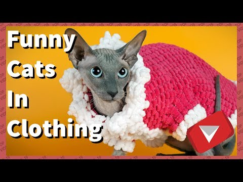 Cats In Clothes Falling Over Compilation [Funny] (TOP 10 VIDEOS)