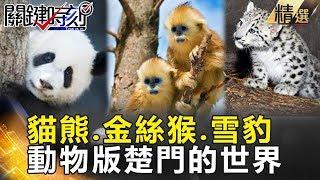 貓熊、金絲猴、雪豹 動物版楚門的世界 - 關鍵時刻精選 馬西屏 朱學恒 劉燦榮