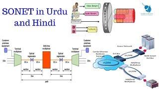 Video SONET Synchronous Optical Network in Urdu and Hindi download MP3, 3GP, MP4, WEBM, AVI, FLV Oktober 2018