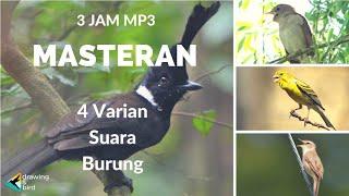 MP3 KOMBINASI Suara Masteran Burung SIKATAN LONDO, CILILIN, KENARI & KERAKBASI