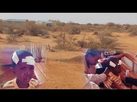 Daawo :Bahal Duulaya Oo Carruur Ku Cunay Degmada Gaashaamo Ee Maamulka Somaliland.