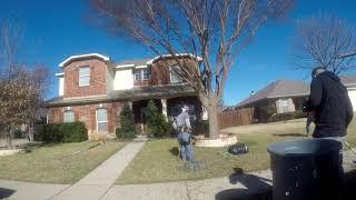 Tree Trimming a Lacebark // DENTON, TX