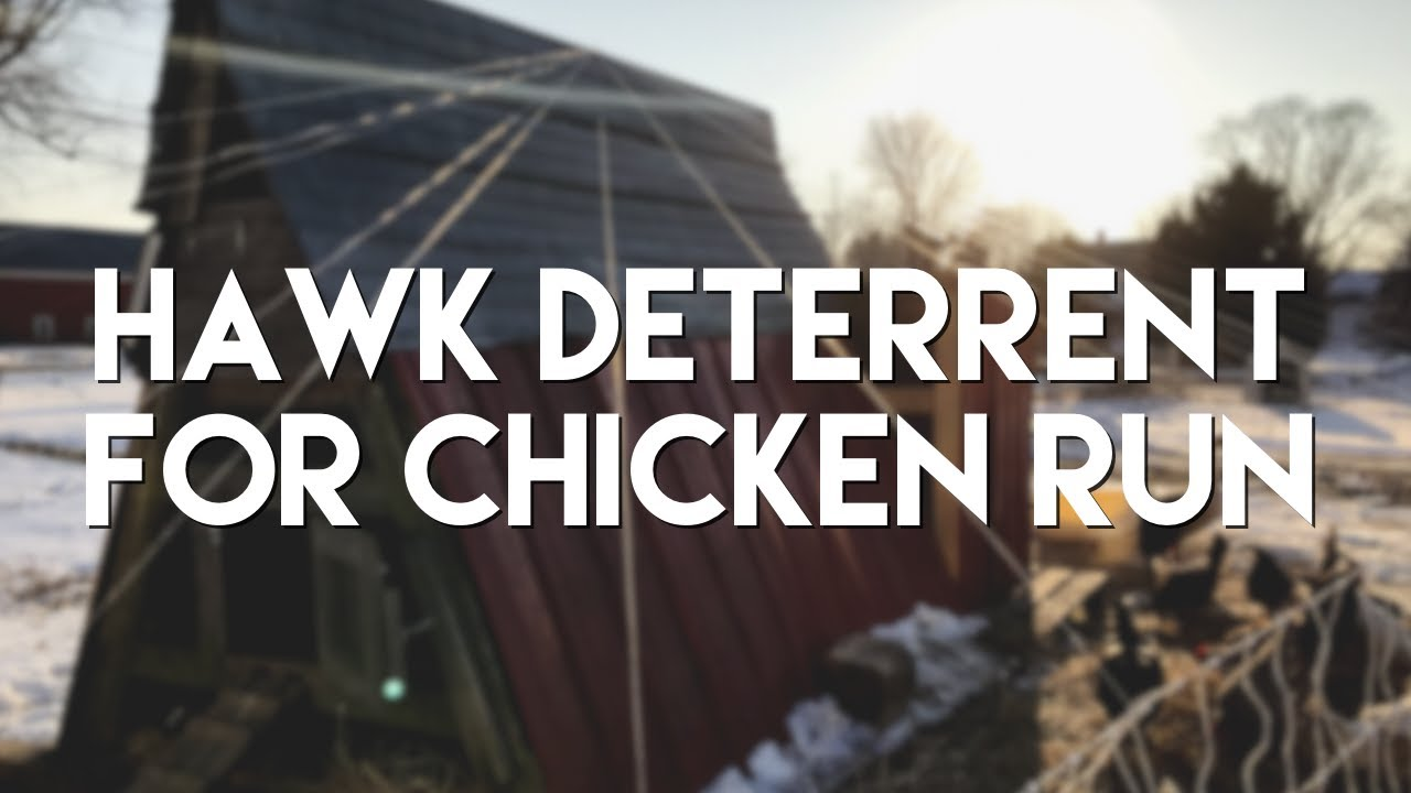 Protect Your Chickens from Hawks Using Fishing Line | Belden Farmstand