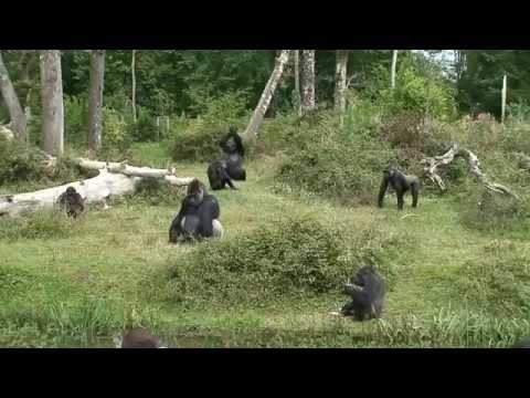 Ballade à la vallée des singes