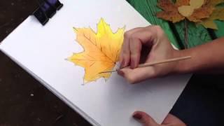 Как правильно нарисовать кленовый лист(http://www.youtube.com/channel/UCZ_sZmJcADBgqTGucG-IVUQ новый канал Дарьи В этом Видео-Уроке мы научимся простыми акварельными крас..., 2013-09-30T01:38:34.000Z)