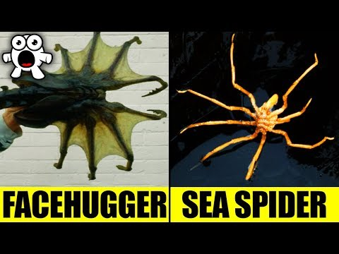 Top 10 Movie Monsters That Exist in Real Life