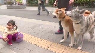 だいすけ&さくらが秋田駅前の仲小路商店街へ。そこでお邪魔した「仲小...