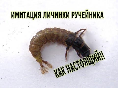 Личинка Ручейника  Caddis Larva. Как живая!