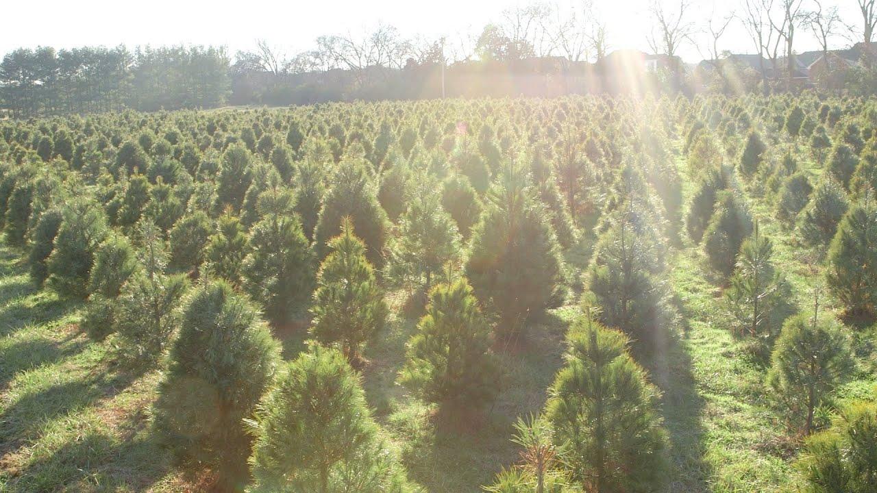 Country Cove Christmas Tree Farm - YouTube