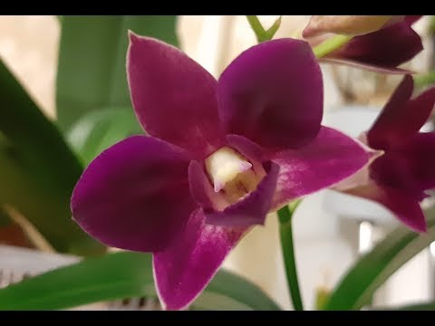 Корневин или Рибав Экстра -- что эффективнее для орхидей, нюансы в использовании.Море, чайки и попуг