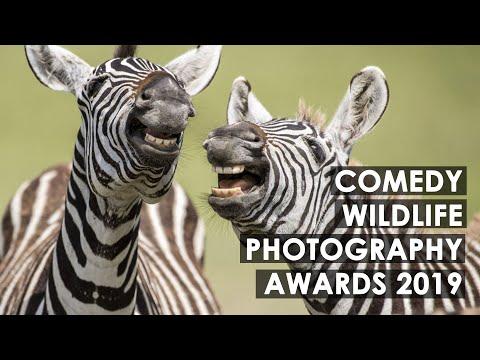 comedy-wildlife-photography-awards-2019