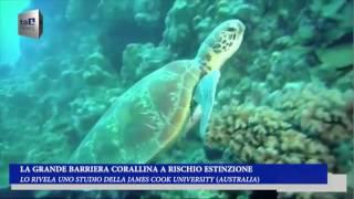 LA GRANDE BARRIERA CORALLINA A RISCHIO ESTINZIONE