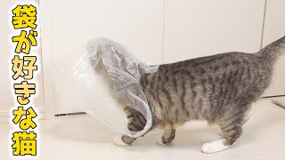 cute cats playing with the plastic bag
