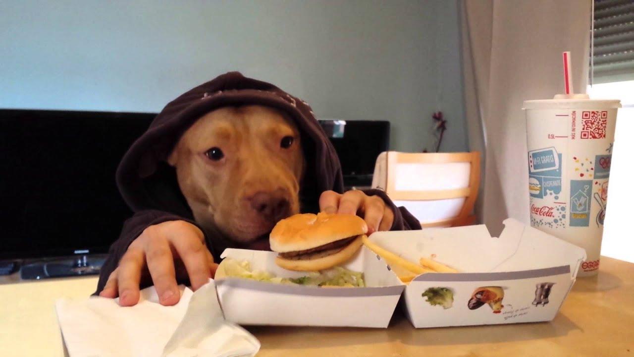 Resultado de imagen para perro comiendo