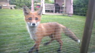 Fox first visit