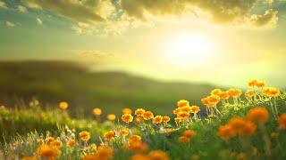 Morning Relaxing Music - Stress Relief Music, Positive Energy, Morning Music (Adele)