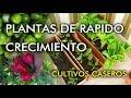 PLANTAS DE RÁPIDO CRECIMIENTO