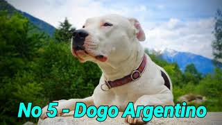 Top 5 Dog Breeds That Can Defeat A Kangal Dog in Hindi  Dogs Biography