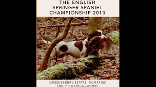 2013 English Springer Spaniel Championship Held At Queensbeery Estate