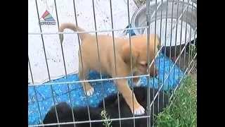 Обязательное чипирование собак - как это будет