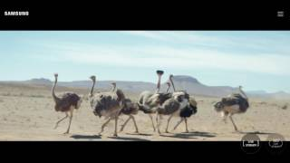 Samsung #DoWhatYouCant Commercial for the Samsung Galaxy S8 and S8 Plus Ostrich