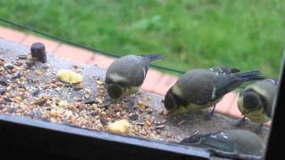 Homemade Bird Feeder Breakfast At The Bird Table