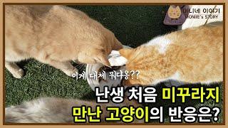 난생 처음 미꾸라지 만난 고양이의 반응은?