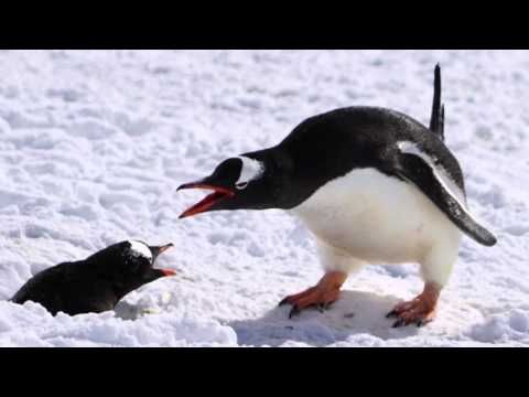 Photos from Antarctica (HD)