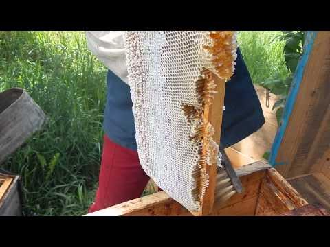 Сбор мёда ( д. Даниловка)