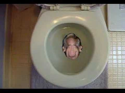 Head Flushed Down Toilet