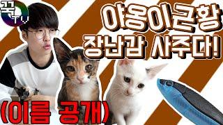 꾹TV 고양이친구 이름공개, 근황 장난감사주다!! (귀여워죽음ㅠ)