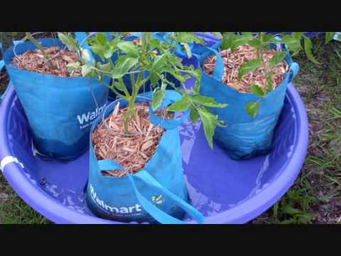 The Kiddie Pool Sub Irrigated Planter? Crazy Idea? Well Maybe Not!  (Revisited)