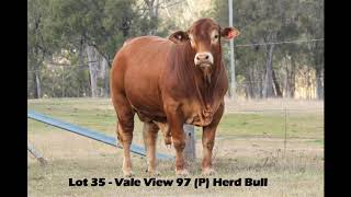 Vale View 97 - Lot 35 Bunya Droughtmaster Bull Sale