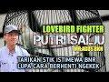 Lovebird Fighter Putri Salju Tarikan Stik Istimewa Di Bnr Lupa Cara Berhenti Ngekek  Mp3 - Mp4 Download