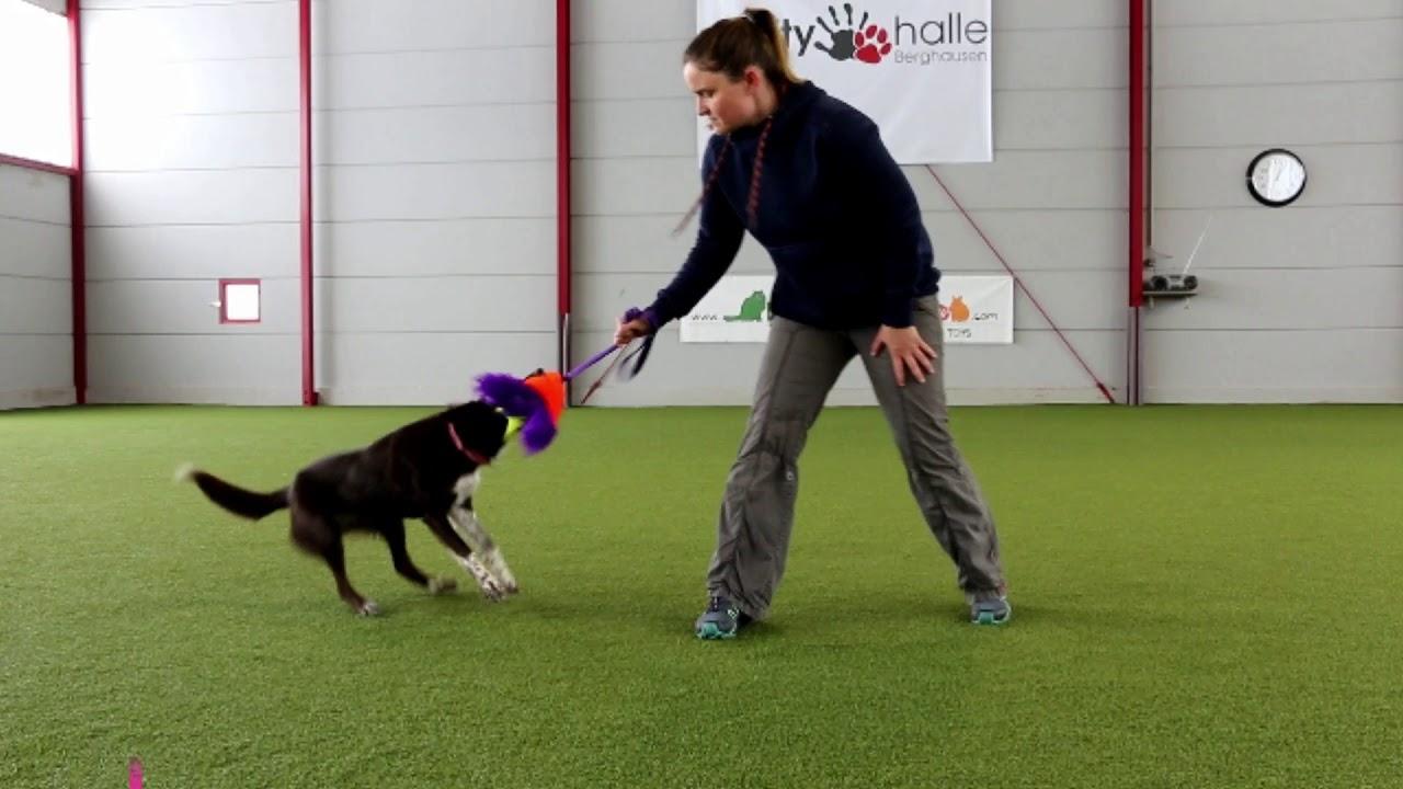 Let's play: Dieses Hundespielzeug ist sinnvoll für Deinen