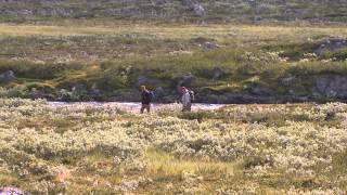 Swedish Lapland, Vol. 2 - Rostu (Trailer, English)