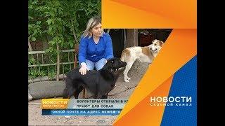Показываем первый открытый волонтерами приют для собак на правобережье