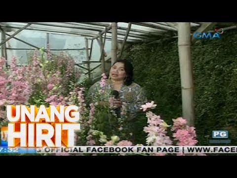 Unang Hirit: Flower farm sa Atok, Benguet, ibinida ni Love!