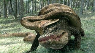 Версус. Анаконда против крокодила и других животных.