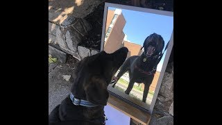 Hilariously FUNNY DOGS Looking In the Mirror
