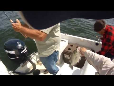 Lake Livingston White Bass Vertical Jigging With A Guide