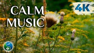 10 Часов | Спокойная Музыка для Снятия Стресса | Красивая Природа и Звуки Природы | Пение Птиц