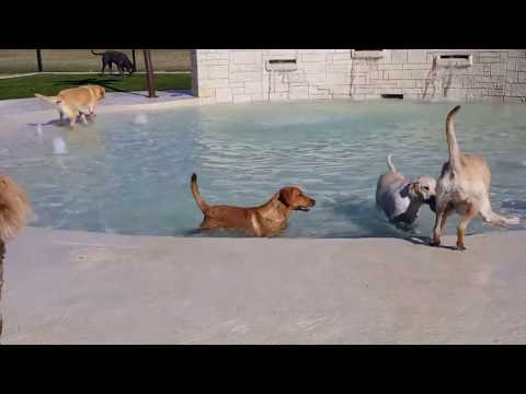 Rover Oaks Pet Resort Unveils New Water Park for Dogs!